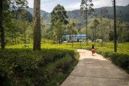 nuwara eliya - one of the best places to visit in sri lanka