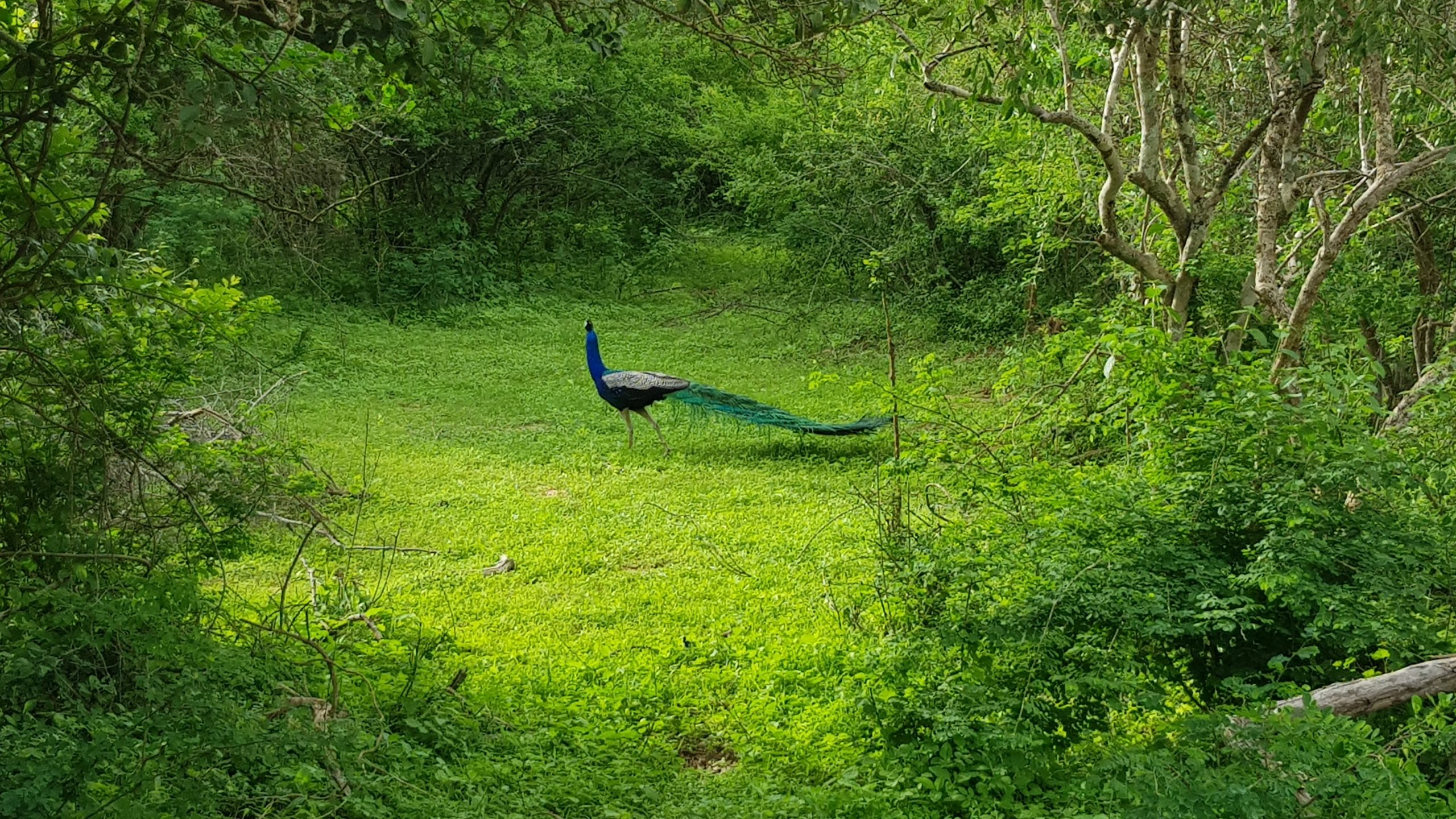 best national parks of sri lanka - bundala national park