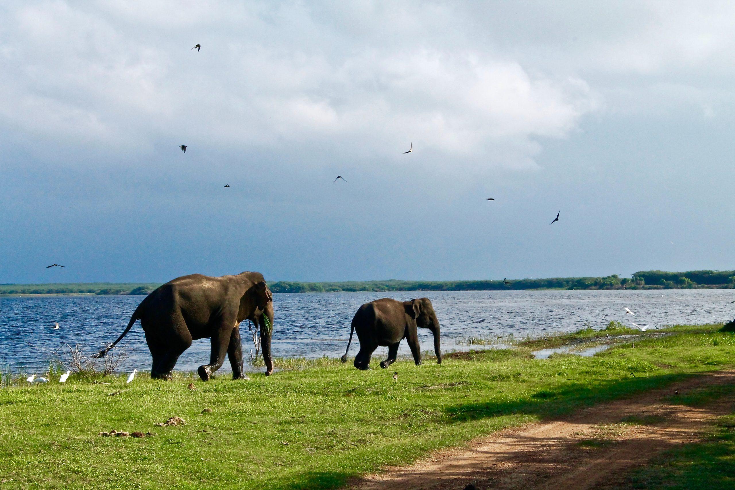 best national parks of sri lanka
