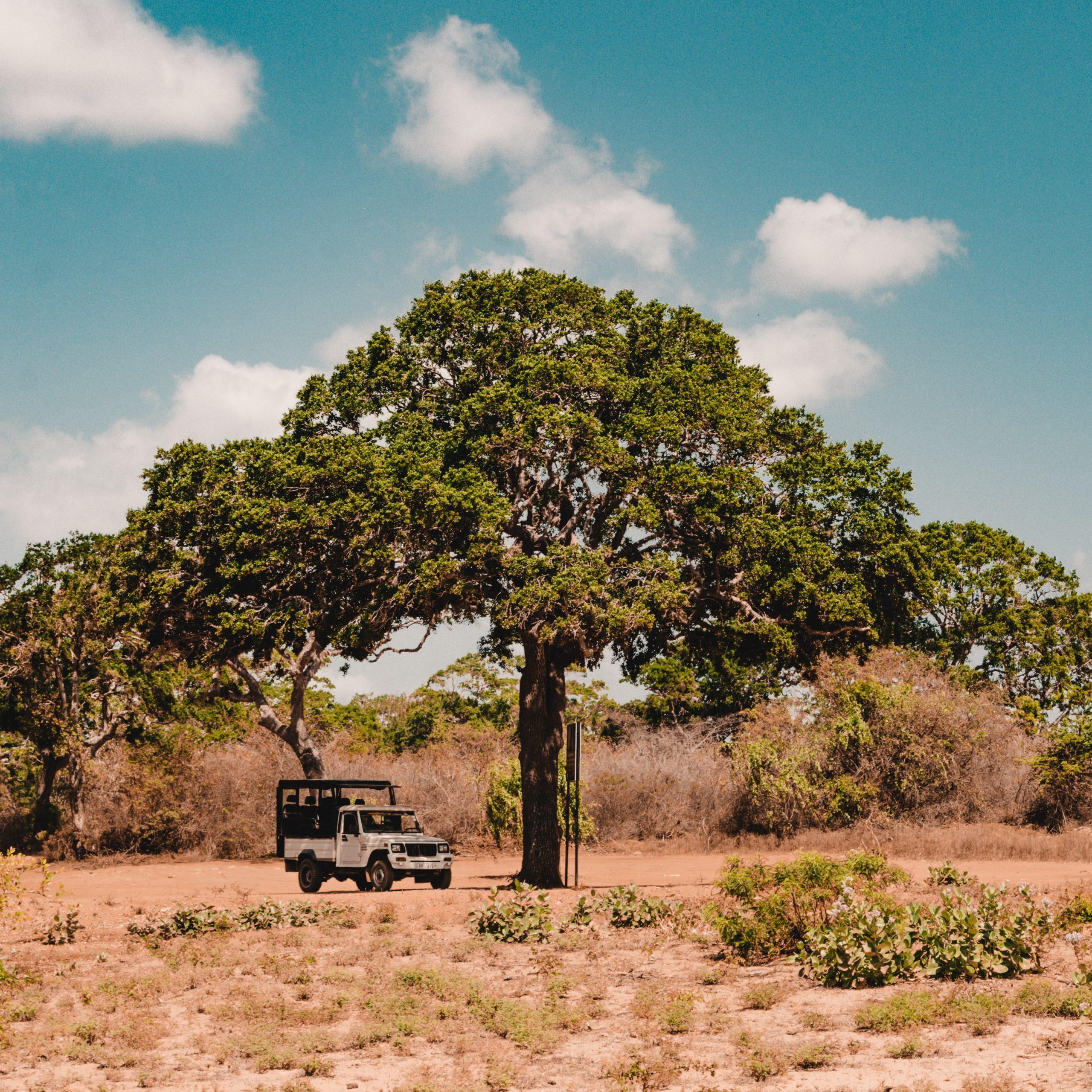 wildlife in sri lanka - largest national park in sri lanka